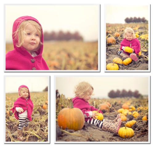 pumpkinpatch2012blog2